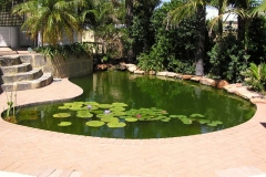 A Pool to Pond Conversion